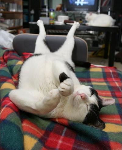 猫咪被毛线绕满全身的囧相,猫咪可爱的吃相,休闲随意的走路姿势.